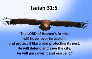 large bird Isaiah 31